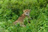 Africa-355.jpg