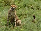 Africa-359.jpg