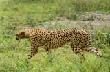 Africa-361.jpg