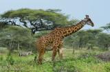 Africa-366.jpg