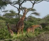 Africa-375.jpg
