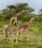 Africa-376.jpg