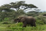 Africa-378.jpg