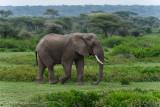 Africa-384.jpg