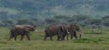 Africa-386.jpg