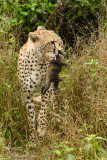 Africa-397.jpg