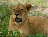Africa-421.jpg