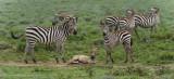 Africa-435.jpg