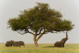 Africa-441.jpg