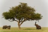 Africa-442.jpg