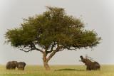 Africa-443.jpg