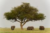 Africa-444.jpg
