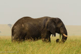 Africa-446.jpg