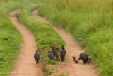 Africa-448.jpg