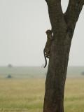 Africa-457.jpg