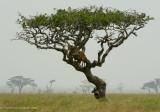 Africa-460.jpg