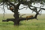 Africa-461.jpg