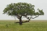 Africa-462.jpg