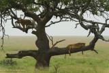 Africa-463.jpg