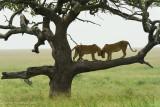 Africa-464.jpg
