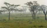 Africa-472.jpg