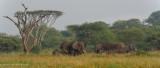 Africa-474.jpg