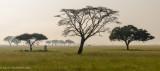 Africa-475.jpg