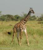 Africa-476.jpg