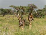 Africa-477.jpg