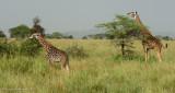 Africa-478.jpg