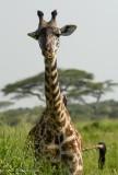 Africa-479.jpg