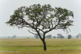 Africa-513.jpg