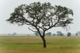 Africa-514.jpg