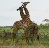 Africa-516.jpg