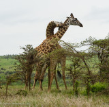 Africa-517.jpg