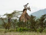 Africa-518.jpg