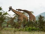 Africa-519.jpg