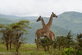 Africa-521.jpg