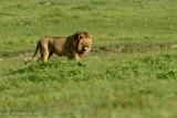 Africa-528.jpg