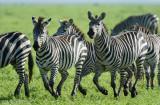 Africa-547.jpg