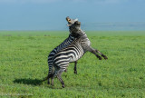 Africa-550.jpg