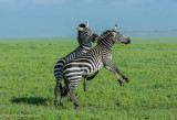 Africa-551.jpg