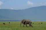 Africa-560.jpg
