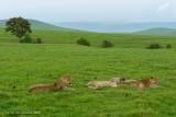 Africa-592.jpg