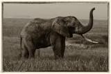 Africa-595.jpg