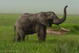 Africa-596.jpg
