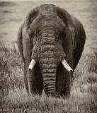 Africa-597.jpg
