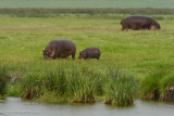 Africa-599.jpg