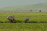 Africa-603.jpg