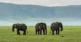 Africa-606.jpg